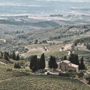 Linguini Napa Valley Winery